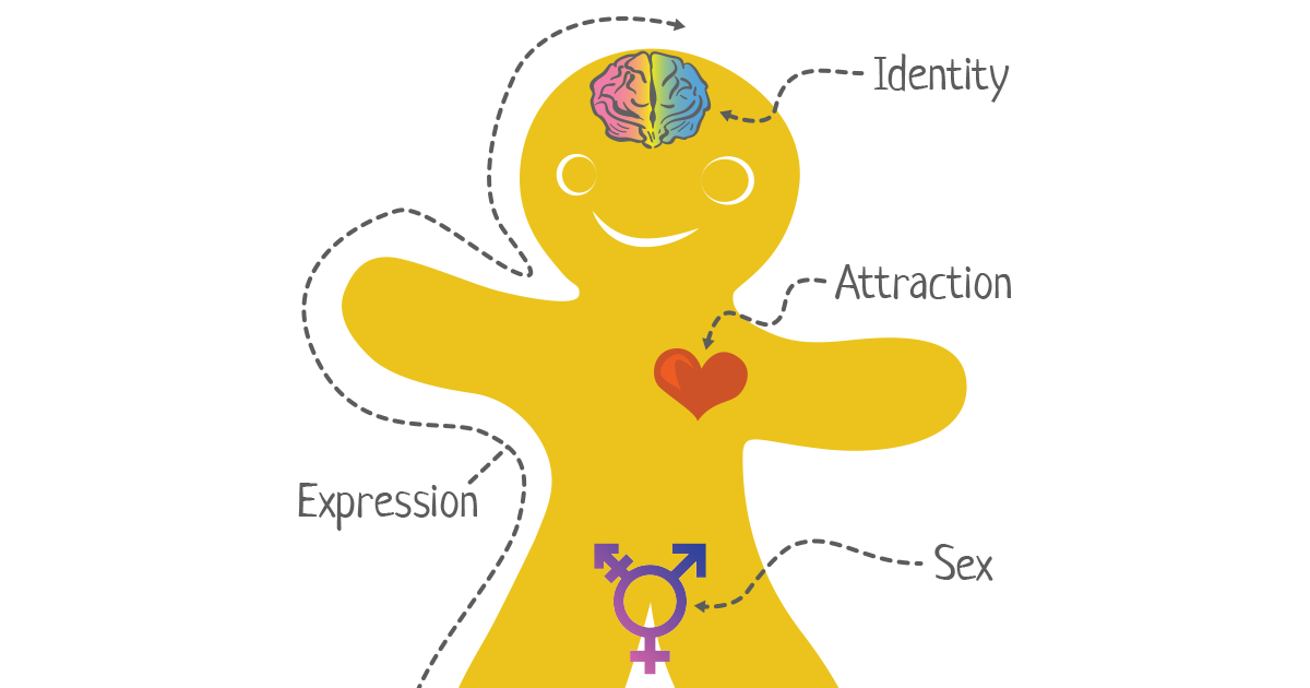 The Genderbread Person | A free online resource for understanding